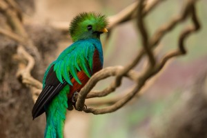 quetzal, Foto: www.latitud21.com.mx
