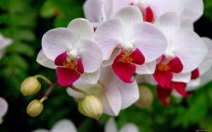 Orquídeas, Foto: gemmav58.wordpress.com