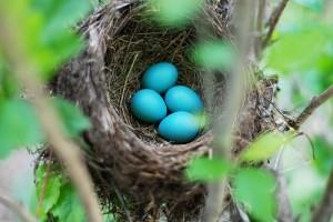 Huevos  de Quetzal,