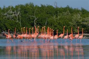 Flamingos en Río Lagartos, Foto: www.happyholidays.com.mx