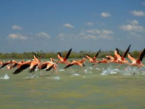 Río Lagartos - Foto de Internet.